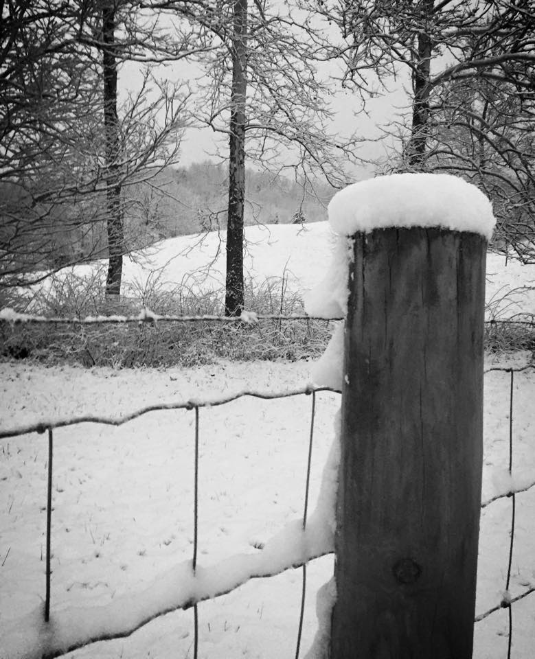 A Snow Covered Fence by Brandie Trent