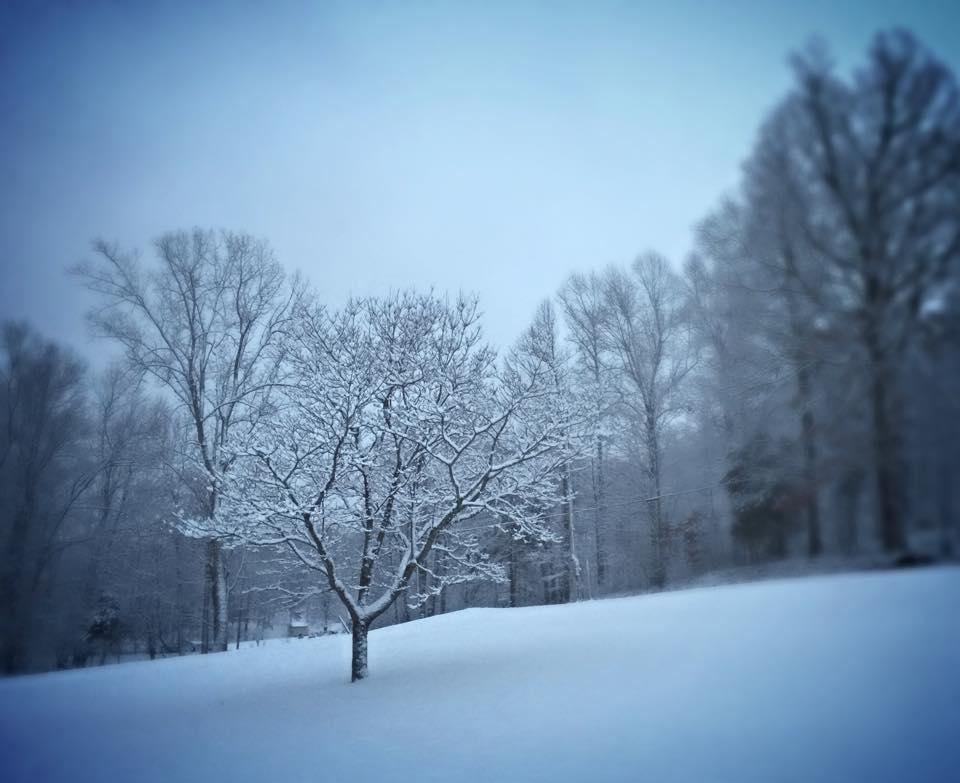 Kentucky Winter Scene by Brandie Trent