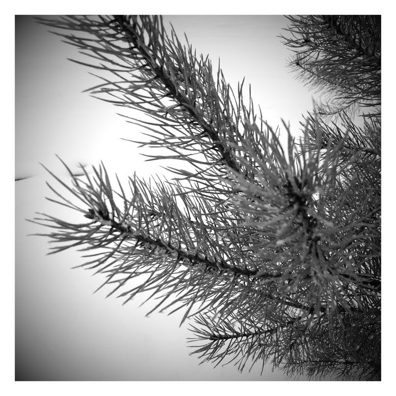 winter2016-1