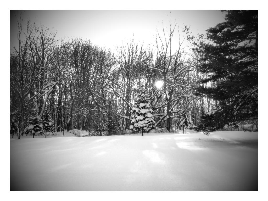 winter2016-5